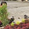 IFIBS Kota Magelang Persiapan Menyambut Santri dengan Penanaman Pohon